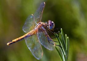 Dragonfly on plant needles