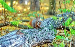 Squirrel standing on fallen tree trunk
