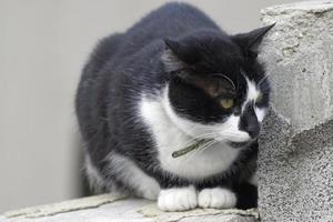 Black and white cat sitting on degraded concrete fence