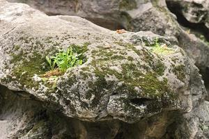 Rock with moss and plants