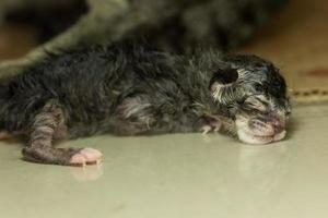 Sleeping newborn kitten