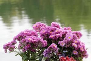 Manojo de crisantemos rosados cerca del agua del lago en otoño