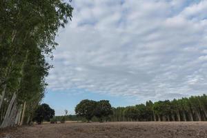 paisaje con arboles foto