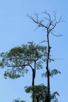 Trees in the Khao Yai National Park