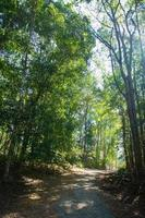Forest at Khao Yai National Park
