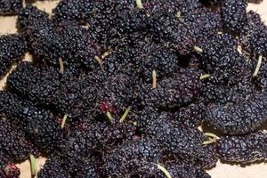 Mulberry, close-up photo