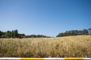 paisaje en el parque nacional khao yai foto