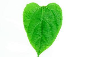 hoja verde en forma de corazon foto