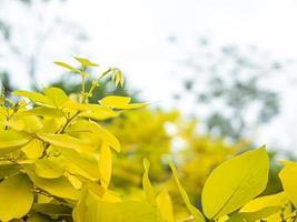 hojas de la temporada de otoño foto