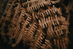 Close-up of a fern photo