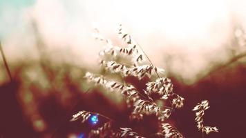 flores silvestres al atardecer