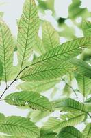 hojas de color verde brillante