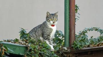 Kitten on garage roof