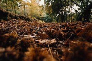 hojas en el suelo en el bosque foto