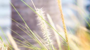 flores de hierba silvestre de enfoque suave foto