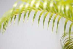 Green palm leaf and shadows