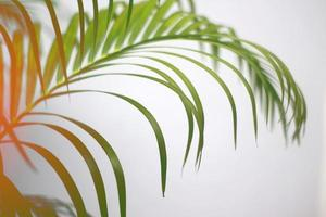Colorful tropical palm leaf background photo