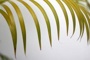 Hoja verde de palmera y sombras sobre un muro de hormigón fondo blanco.