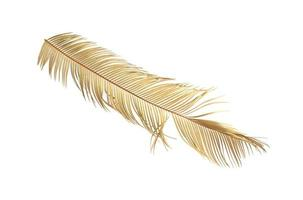 Tropical dry palm leaf isolated on white background photo