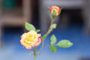 Rosa naranja que crece en un jardín.