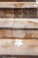 Flower on steps
