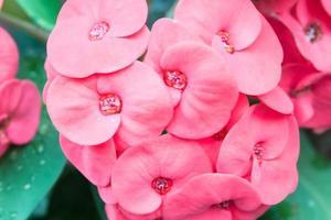 flores rosadas poi sian foto
