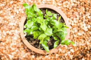 planta en maceta verde