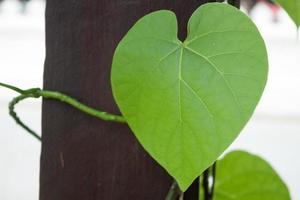 Wormwood leaf outside photo