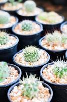 cactus en macetas de cerámica