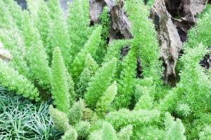 Green plant in a garden