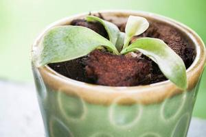 Potted plant in green pot photo