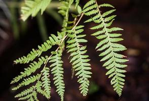 Close-up of a fern leaf photo