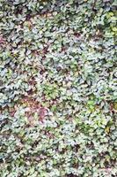 pared de hojas verdes foto