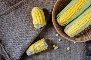 cortar mazorcas de maíz foto