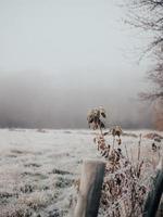 Morning in winter