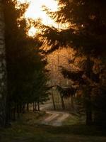 pinos marrones y verdes