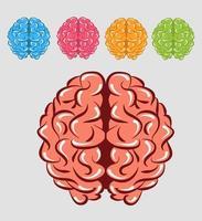 cerebros humanos coloridos