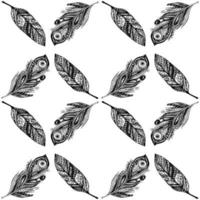 Pattern with feathers. vector