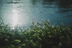 plantas junto al río
