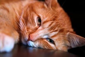 Orange tabby cat's face