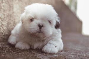 Fotografía en primer plano de cachorro de pelo largo blanco foto
