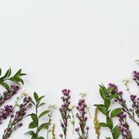 flores púrpuras y blancas sobre un fondo blanco foto