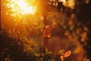 luz dorada del sol en el bosque foto