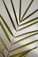 Close-up of a palm leaf