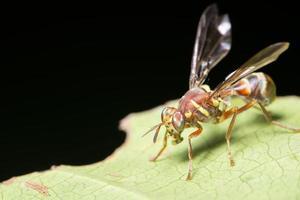 mosca de la fruta en una planta