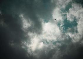 A bird flying in a cloudy sky photo