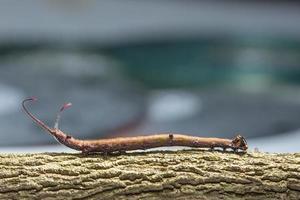 gusano en un árbol, macro