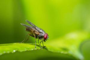 Fly on a plant, macro photo