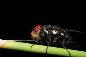 Fly on a plant photo