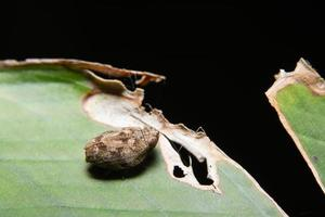Treehopper on a plant